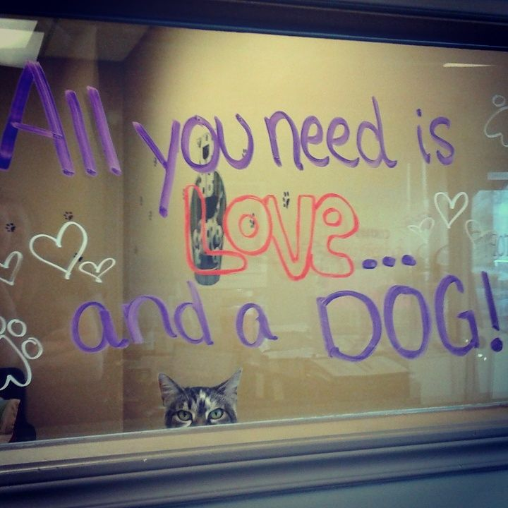 """All you need is love... and a dog!""  Lila (adopted 2016) was clearly unimpressed with the window art ;)"
