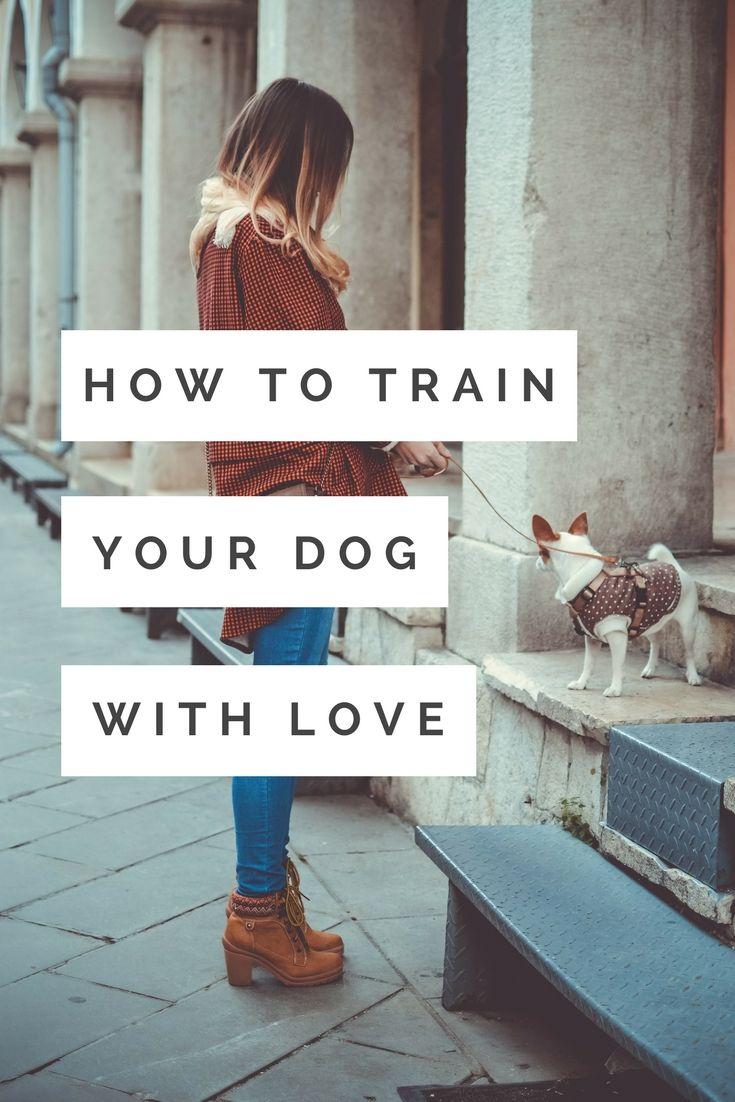 Book Review Zak George S Dog Training Revolution By Zak George