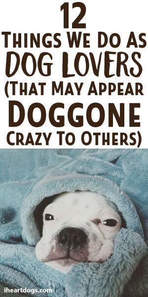 12 Things We Do As Dog Lovers (That May Appear Doggone Crazy To Others)