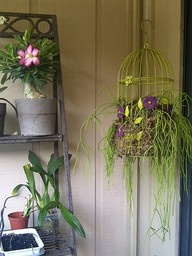using an old birdcage as a hanging planter basket (♥): Diy Hanging, Green Thumb, Birds Cages, Hanging Birdcages, Hanging Plants, Rainforests Gardens, Birdcages Planters, Hanging Planters, Hanging Baskets