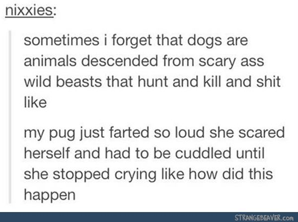 funny tumblr comments 12-31 2