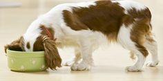 Descubra aqui como preparar uma verdadeira comida caseira para cachorro e gato, sem nenhum aditivo artificial nem conservante. Seu bichinho agradece!