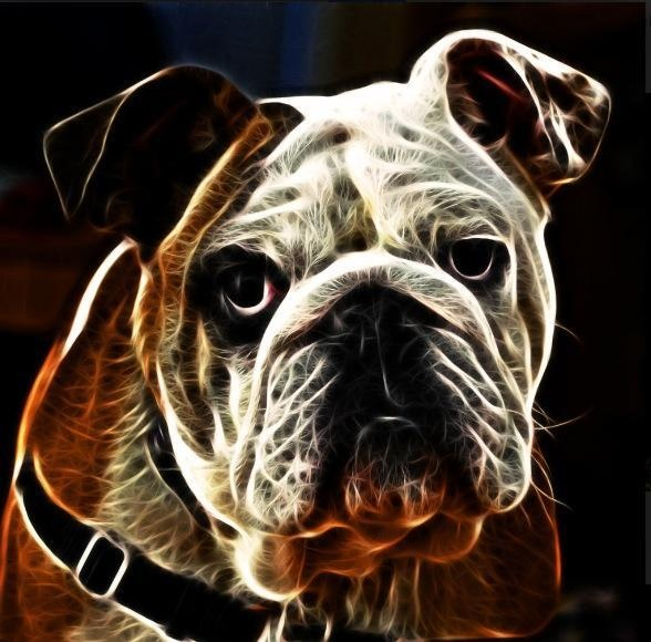 DogColors Fractals 3, Animal Art, Creative Fractals, Fractals Arts ஜ, Fractals Animales, Bulldogs Art, Bulldogs Fractals, Doggie Art, Fractals Artworks