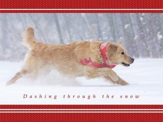 166 best Goldens Rule images on Pinterest | Animals, Golden ...