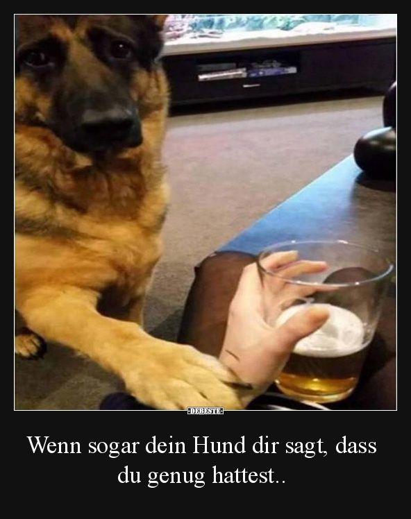 Wenn sogar dein Hund dir sagt, dass du genug hattest..   Lustige Bilder, Sprüche, Witze, echt lustig