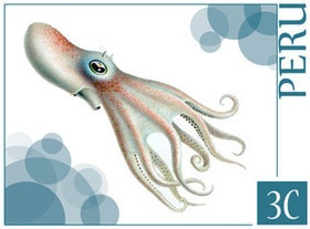 Terror from the deep or just a Bathypolypus Valdiviae, from the Cephalopodes collection in www.stampfrenzy.com.