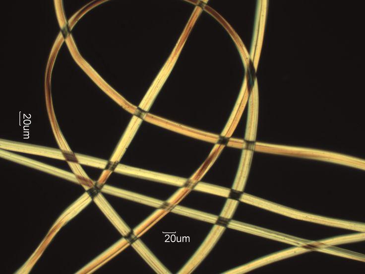 Silk Fiber Microscope