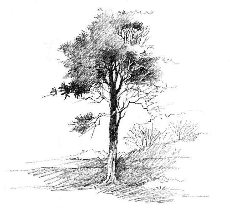деревья рисунок графика контрастные