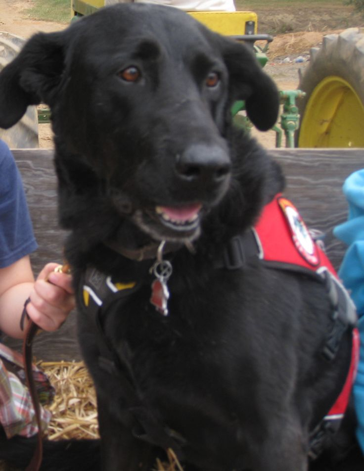 Best Dog Breeds For Autism Service Dogs