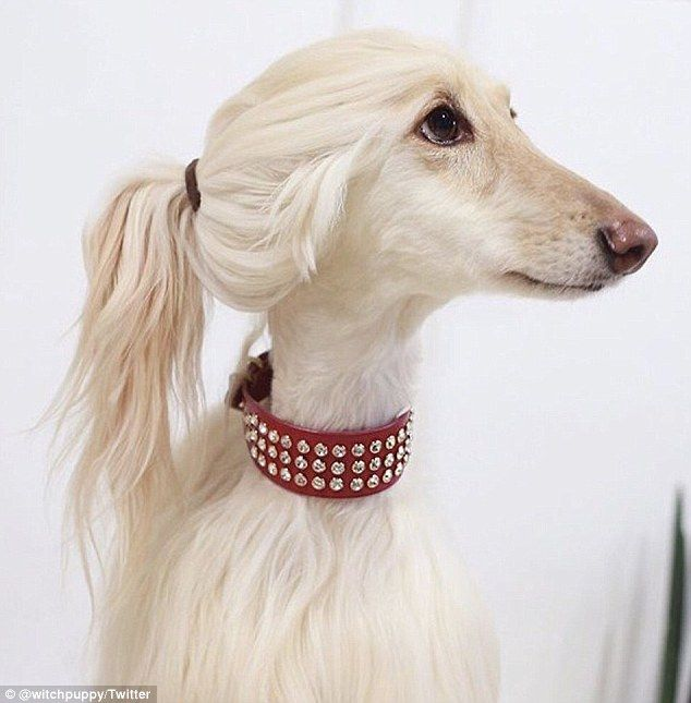 Check Out Ivanka Trump S Doggy Doppelganger Cute Animals