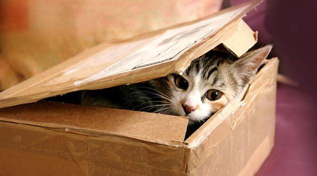 Katze allein zu Haus beschäftigen ➲ Kein Problem mit unseren 5 Beschäftigungsideen für Katzen ✓ Spielparkour ✓ Ballspiele uvm ➲ Hier gibt's die besten Tipps