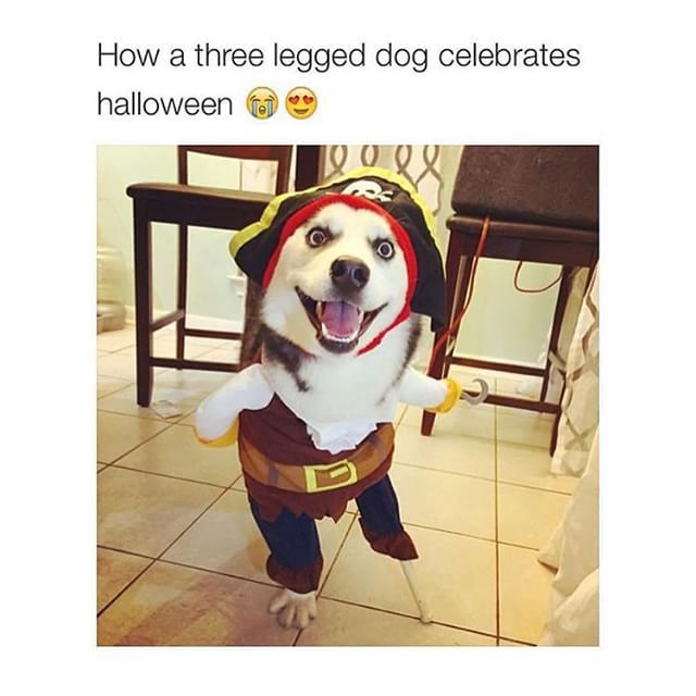 45++ Where do you find a one legged dog joke ideas