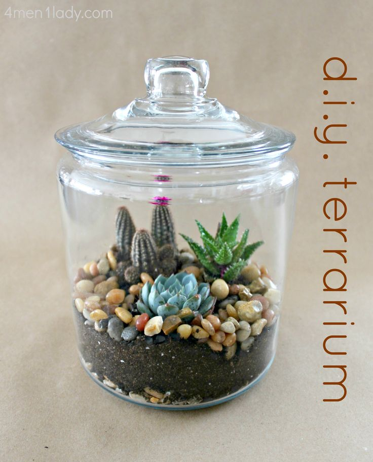 Bring the outdoors in with your own diy terrarium! Perfect!! The cat can't get into this to chew on the plants!!