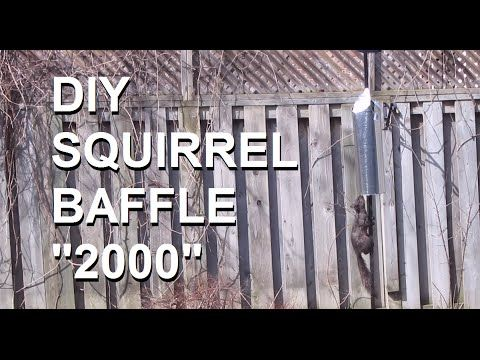 "DIY Squirrel baffle: Simple and effective | Published on Apr 9, 2016 This has truly ""baffled"" my most acrobatic squirrels. $7.50 Cdn 5"" diameter, 30"" long (cut to around 24""), 30gauge galvanized vent pipe.No more ""feeding"" the squirrels. BIRDS ONLY!!!"