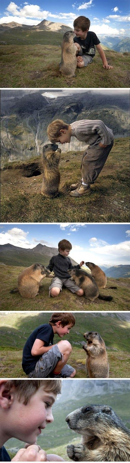 Amazing Friendship between Matteo Walch, a 13-year-old boy from Austria and a Marmot. Matteo Walch has struck up an unlikely friendship with a group of marmots in the Austrian Alps.