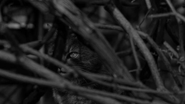 Kasımda kedi baskadir:)