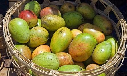 African Mango: World's Most Powerful Weight Loss Ingredient