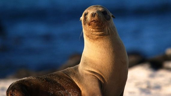 """San Diego Is Being Sued Because of All the Damn Sea Lion Poop!.... Last week La Valencia Hotel and George's at the Cove filed a lawsuit against the city claiming """"the stink is driving away customers and poses a health risk.""""...(This Hotel and restaurant are so dumb!!)"""