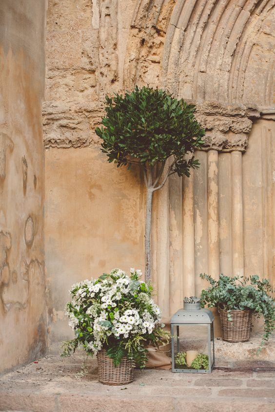 noleggio piante matrimonio
