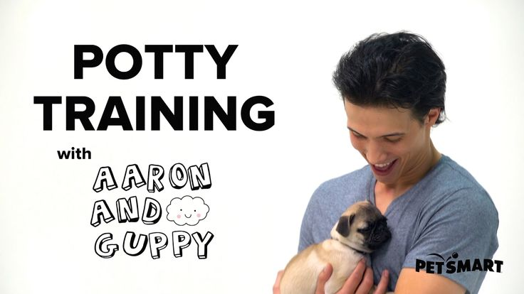 PetSmart Puppy Training: How to Potty Train a Puppy