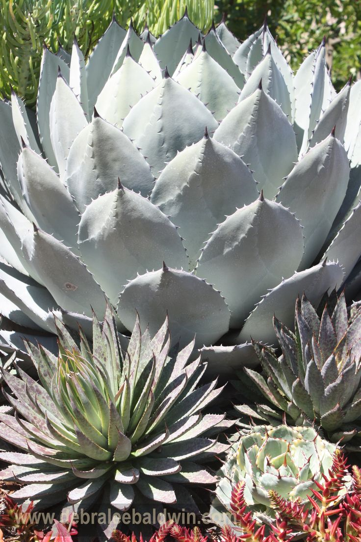 55 best images about Seascapes of Succulents on Pinterest