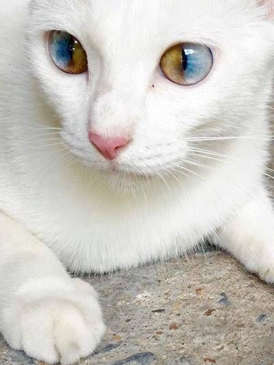 I love her eyes