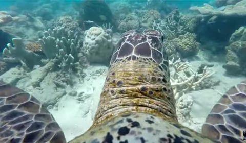 La Grande Barriera Corallina a dorso di tartaruga