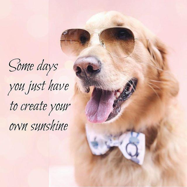 H E L L O Dogaccessories Threespoileddogs Www Threespoileddogs Com Cute Dog Quotes Spoiled Dogs Happy Dogs