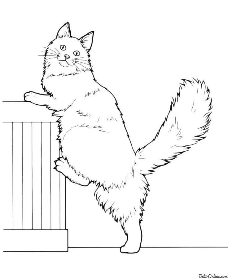 Картинки по запросу картинка кота силует контур ...