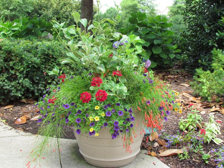 Container Garden Design Ideas find this pin and more on container gardening ideas Bwisegardening Container Gardening 365 Days Of Container Gardening