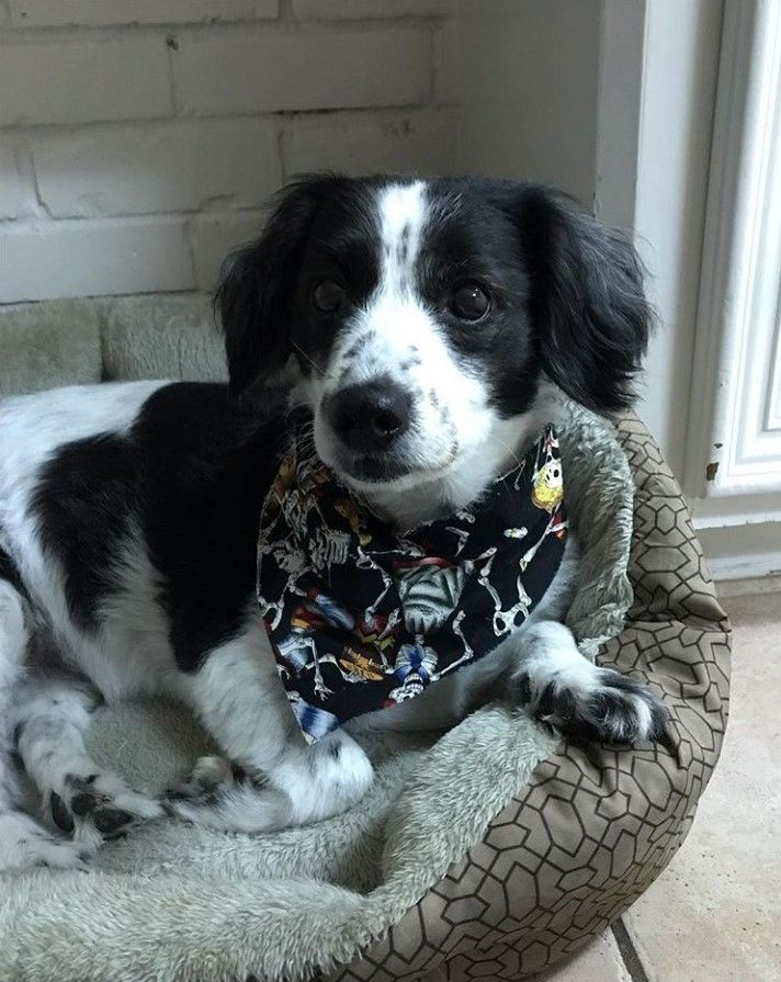 29 Dogs That Are Mixed With Border Collie