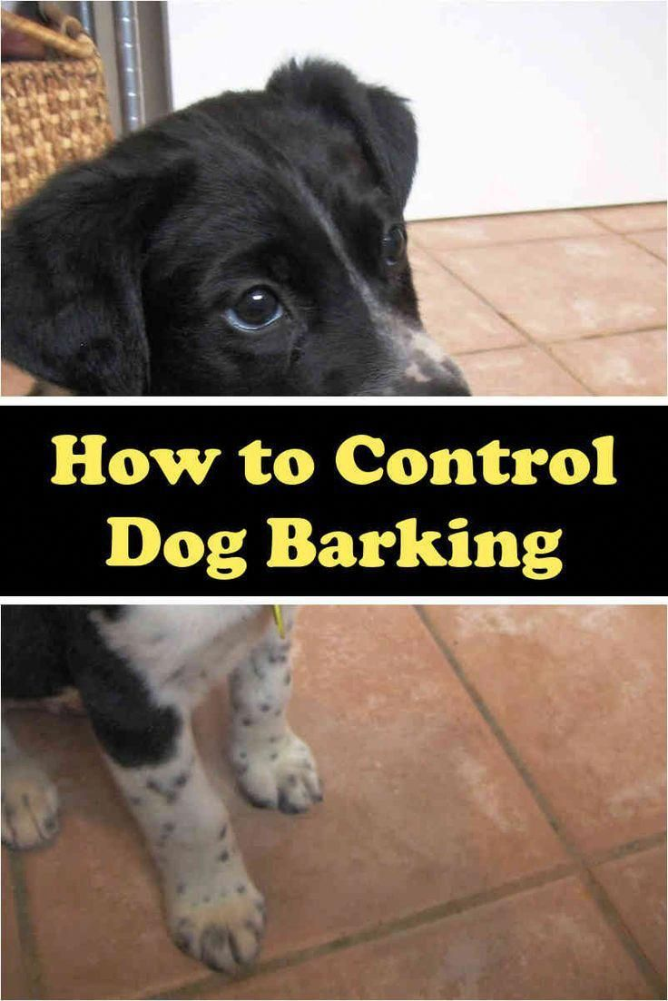Best Dog Training Tricks In Case You Are Buying A New Dog And