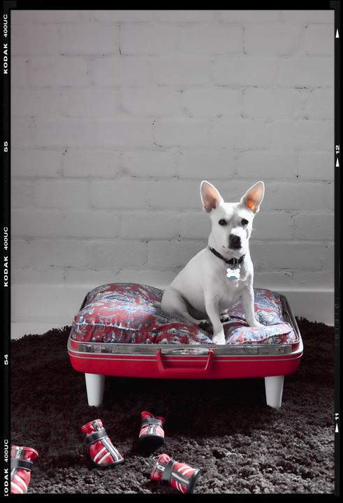 It's hard to go wrong with these little doggie beds from repurposed suitcases.