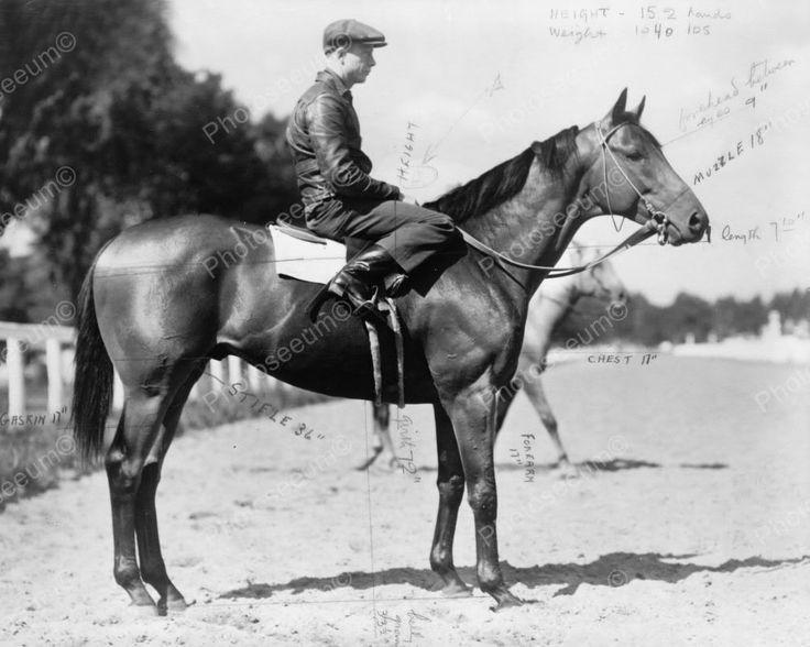 Seabiscuit Race Horse Measurements 1938 Vintage 8x10 Reprint Of Old Photo