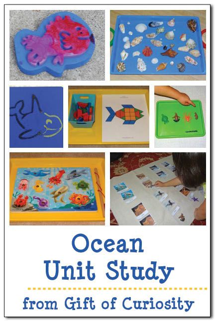 Ocean unit study - lots of activities for young children to learn about the ocean and its inhabitants, plus related content learning as well || Gift of Curiosity