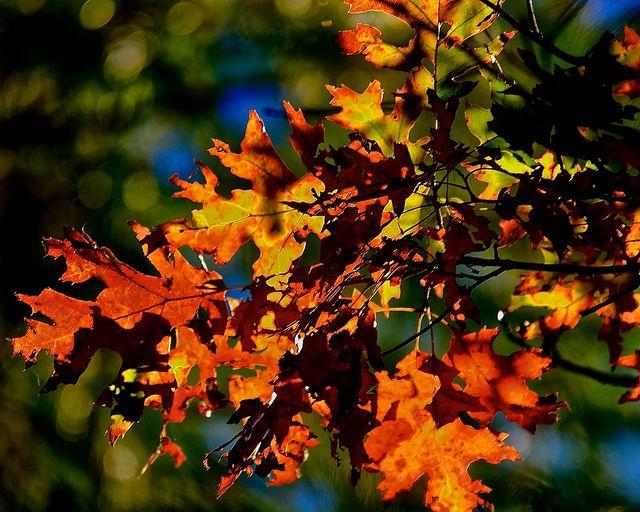 Autumn | Flickr - Photo Sharing!