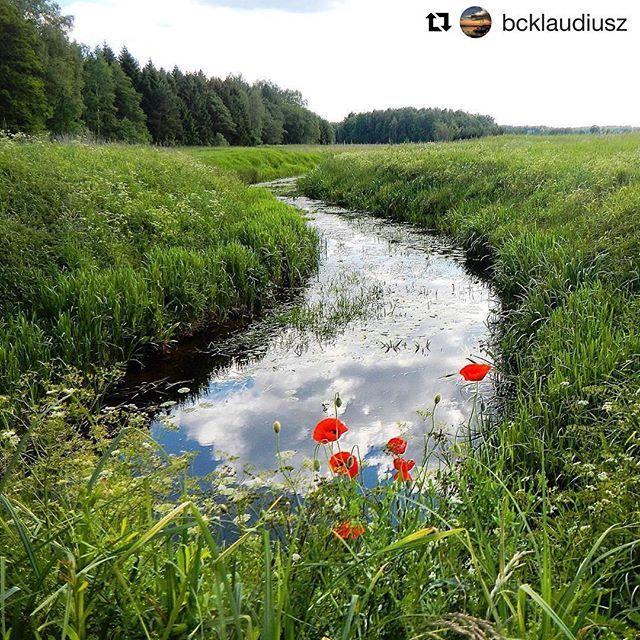 #Repost @bcklaudiusz with @repostapp ・・・ #bcklaudiusz #polska #pola #poland…