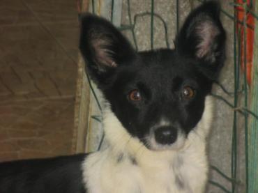 Hund, k.A. (Mischling, Hündin, 2 Jahre) Portugal