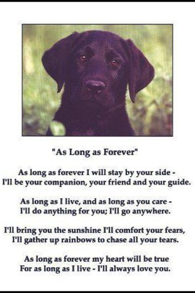 1258 best Loss of a Pet images on Pinterest Animal, Condolences - lost pet poster