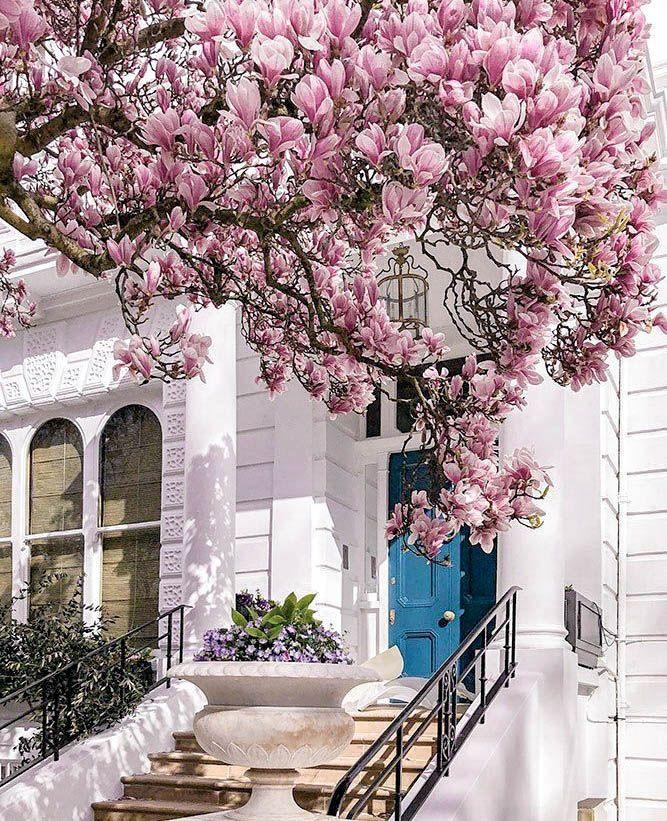 Mobile Lightroom Presets Instagram Presets Desktop Lightroom Preset Influencer Blogger Preset Pastel Presets Airy Light Preset In 2021 Blossom Trees Cherry Blossom Blossom
