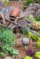 Rustic old farm tools, antique garden cart, ornaments,wall, charming old fashioned feel to the garden mixed with vegetables, flowers, Cerinthe purpurascens, cabbages,  Heuchera, lettuce, herbs, vines, wagon wheel, variegated lemon balm, trellised tree on stone wall, wicker fence, straw mulch, great variety of plantings intermingled.