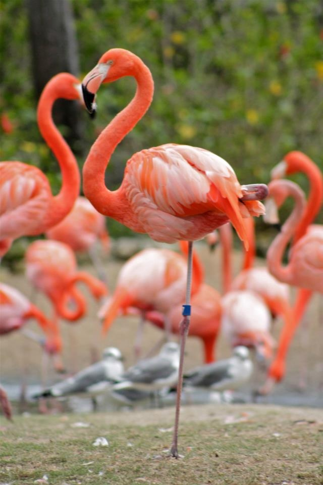 45 Best Images About Busch Gardens Tampa Bay Fl On Pinterest Gardens House And Roller Coasters