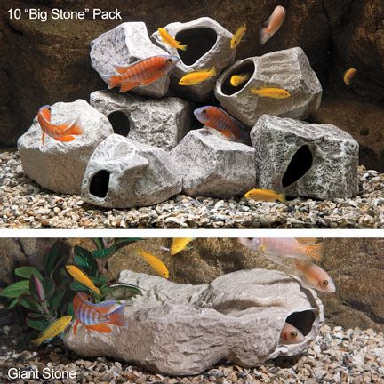 1000 images about african cichlids on pinterest for African cichlid rock decoration