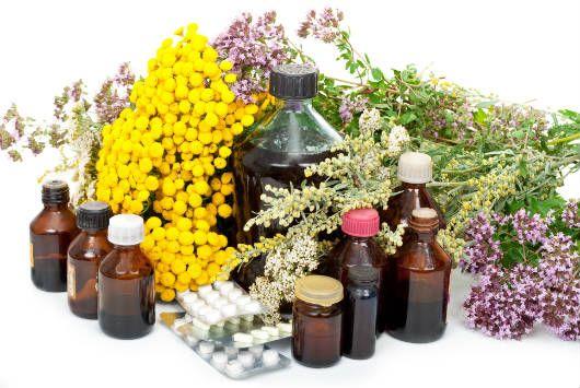 Plantas medicinais são reconhecidas por manter a saúde em dia, algumas ajudam no tratamento de diversas doenças.Veja aqui principais ervas medicinais!