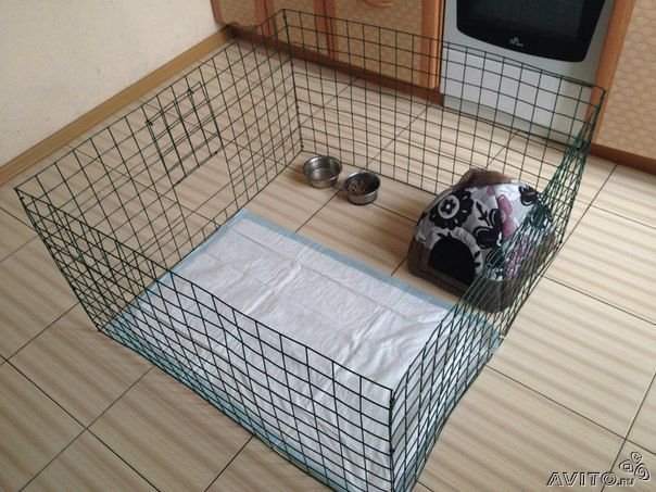 вольер для котят: 15 тыс изображений найдено в Яндекс.Картинках