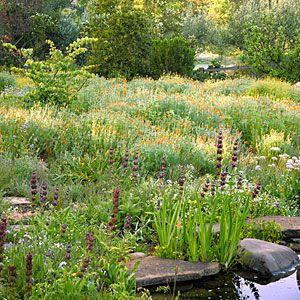 Best Backyard Conservation Images On Pinterest Garden Ideas - Backyard conservation