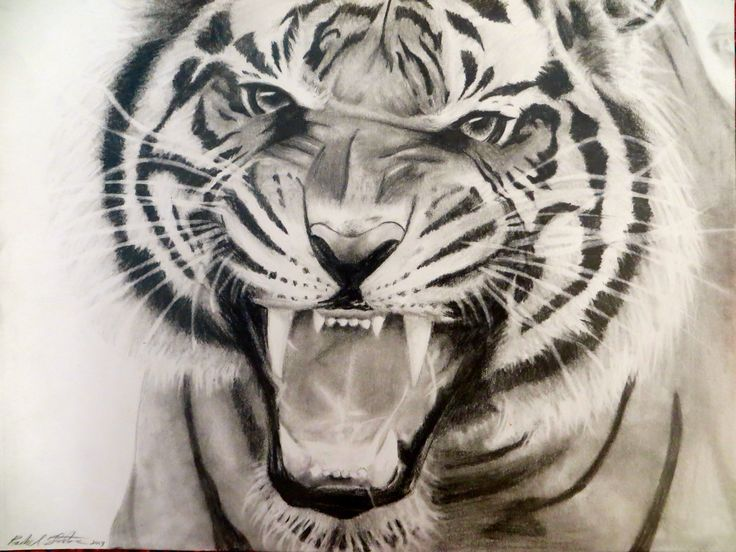 how to draw a tiger face roaring
