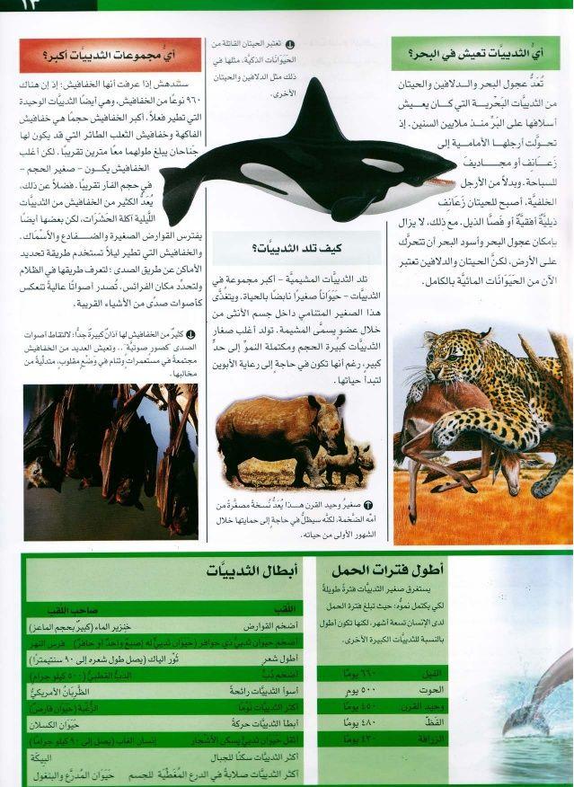موسوعة سؤال وجواب عالم الطبيعة Movie Posters Poster