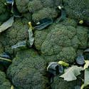 If you live in a warm climate, a fall planting is best, as broccoli thrives in cool weather. Plant seeds in mid- to late-summer in most places.