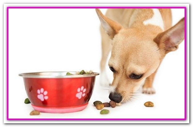 Best Dog Food Brands For Dogs With Sensitive Stomachs 5 Best